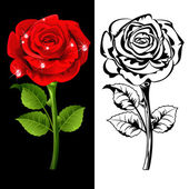 Set from red and white roses