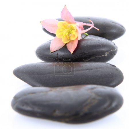 Flower on Spa Stones