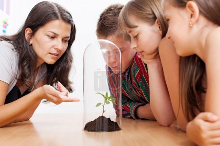 Photo for Teacher explains about greenhouse effect and global warming using a plant enclosed into glass tube - Royalty Free Image