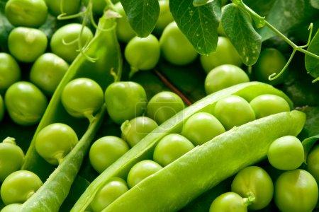 Photo pour Pois verts dans la nacelle jusqu'à fermer. ingrédients alimentaires photo - image libre de droit