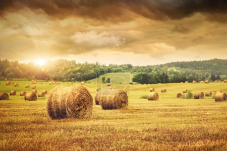 Photo for Field of freshly cut bales of hay with beautiful sunset - Royalty Free Image