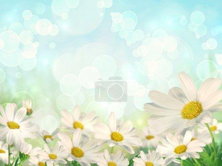 Foto de Fondo de primavera con margaritas blancas y brokeh efecto fondo - Imagen libre de derechos
