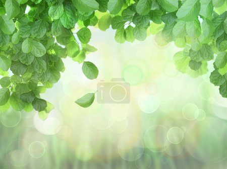 Photo for Spring Background With Leaves and brokeh effect background - Royalty Free Image