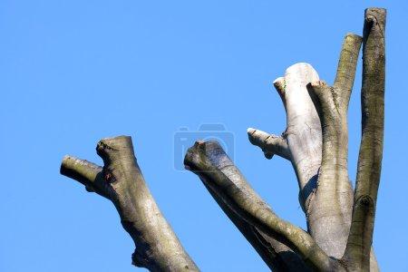 Photo pour Coupé les arbres sur le fond du ciel bleu d'automne - image libre de droit