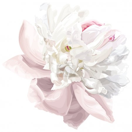 Illustration for Luxurious white peony flower painted in pastel colors - Royalty Free Image