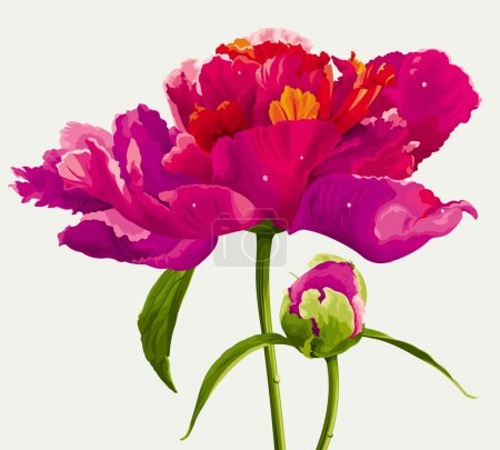 Illustration for Luxurious red peony flower and the bud painted in bright colors - Royalty Free Image