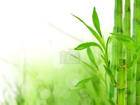 Photo for Bamboo isolated on white background - Royalty Free Image