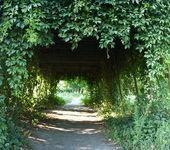 scène du parc. arbres forme une arche