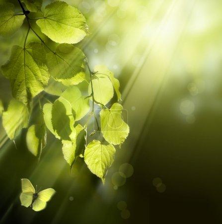 Photo pour Papillon sur le fond des jeunes feuilles de printemps - image libre de droit