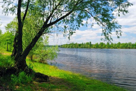 Photo for Tree near the water of river in sunny spring day - Royalty Free Image