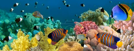 Photo for Underwater panorama with Angel fish, coral reef and fishes. Red Sea, Egypt - Royalty Free Image