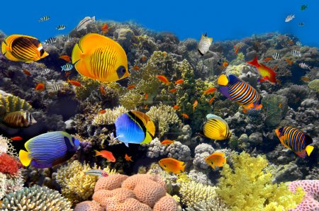 Photo for Coral and fish - Royalty Free Image