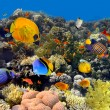 Coral and fish...