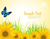 Vector background with yellow sunflowers green grass and butter