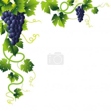 Illustration pour Coin de la liane verte anstract et bouquet de raisins bleus - image libre de droit
