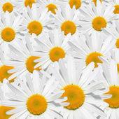 Sedmikráska květ textura