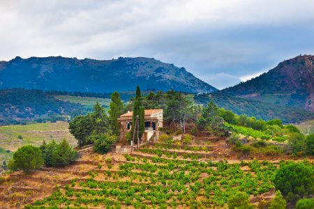 Photo for South France, view of landscape with vineyards - Royalty Free Image