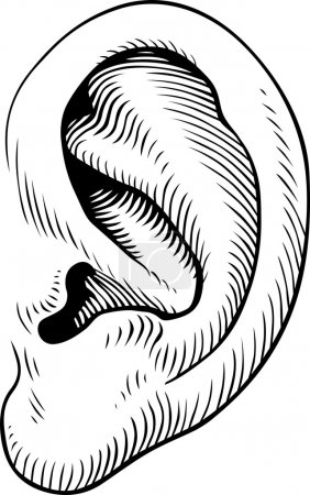Illustration for Ear of man on white background - Royalty Free Image