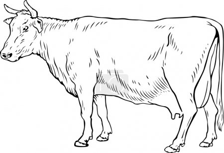 Illustration pour Vache blanche sur fond blanc - image libre de droit
