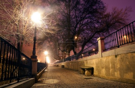 Photo for City street at night with trees and lamppost - Royalty Free Image
