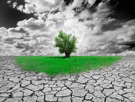 Photo for Concept of environment with tree and dry soil - Royalty Free Image
