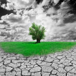 Concept of environment with tree and dry soil...