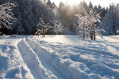 Ski track and winter trees