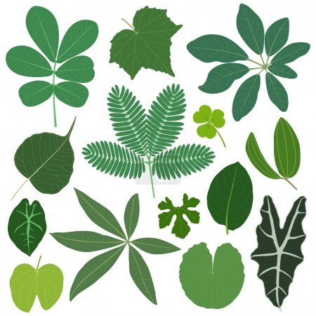Illustration for A set of tropical leaves in color. - Royalty Free Image