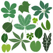 A set of tropical leaves in color
