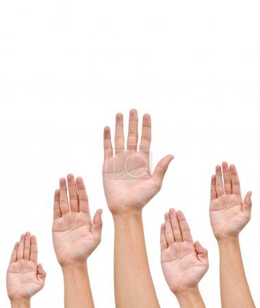 Foto de Muchas manos se levantan en lo alto sobre fondo blanco - Imagen libre de derechos