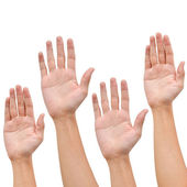 Hand raise up on white
