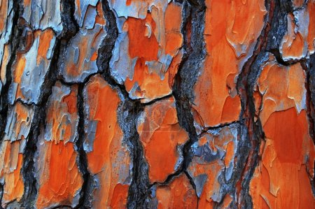 Gum Tree Bark Textures