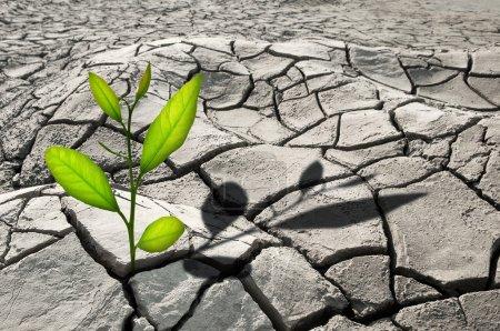 Photo pour Petite plante en croissance fissurée - image libre de droit