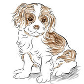 An image of a posed cavalier king charles spaniel puppy dog