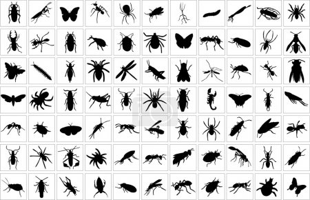Bugs collection
