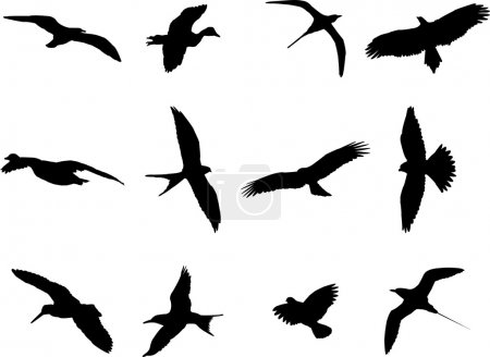 Illustration for Birds silhouette collection - vector - Royalty Free Image
