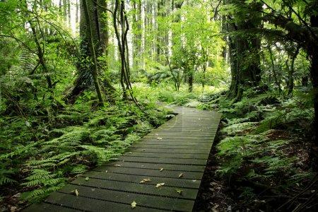 Photo pour Promenade dans la forêt tropicale - image libre de droit