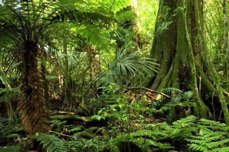Photo pour Forêt de jungle tropicale - image libre de droit