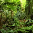 Tropical jungle forest...