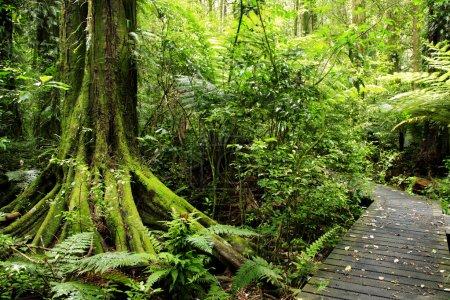 Photo pour Sentier dans la forêt tropicale - image libre de droit