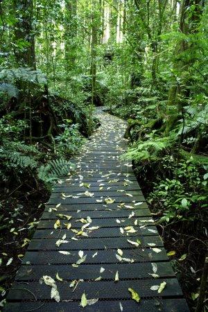 Photo pour Sentier pédestre dans la forêt tropicale de Boardwalk - image libre de droit