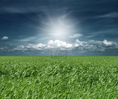 Green grass and blue cloudly sky