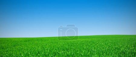 Panorama de un prado