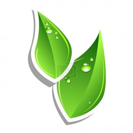 Photo for Green leafs. Vector web element. Sticker - Royalty Free Image