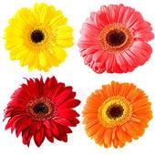 Květinová kolekce