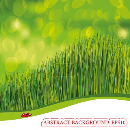 Spring background with ladybird