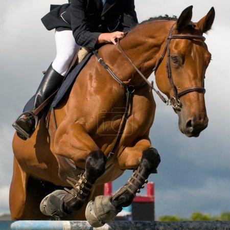 Photo pour Concours de saut avec cheval et cavalier en saut - image libre de droit