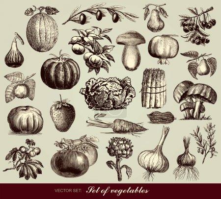 Illustration pour Ensemble vectoriel de légumes - image libre de droit