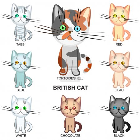 Vector set of the British Shorthair cats of various colors