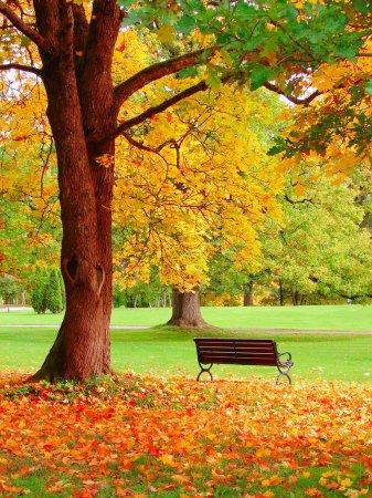 Photo pour Automne dans le jardin public de helsinki - image libre de droit